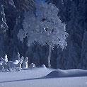 Лыжы беговые